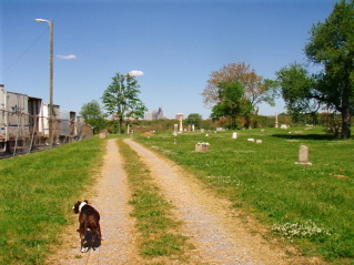roaddog.jpg
