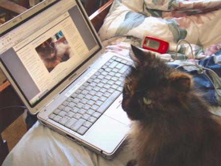 blogcat.jpg