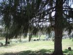 joelton park 004