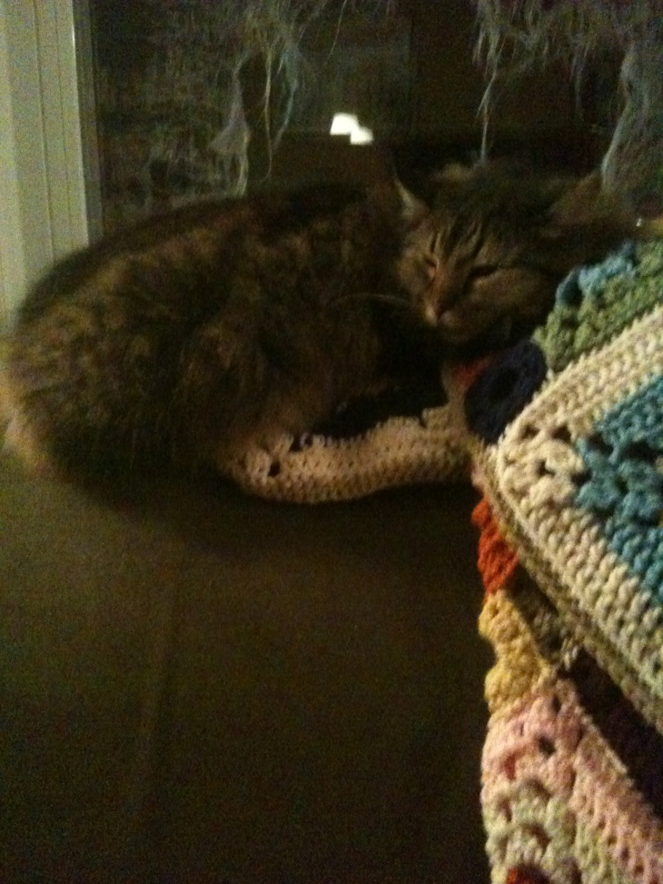 cat and afghan