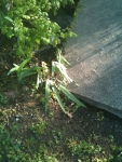 The tell-tale knocked-over irises