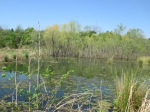 Every time I came near the edge of the pond, it made a noise, like thousands of tadpoles flipping in the mud.