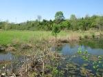 brannigan's creek 027