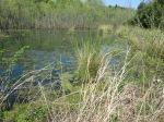 brannigan's creek 029