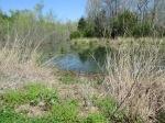 brannigan's creek 040