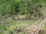 brannigan's creek 041