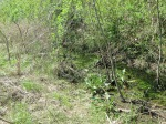 brannigan's creek 043