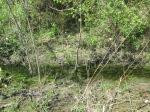 brannigan's creek 044