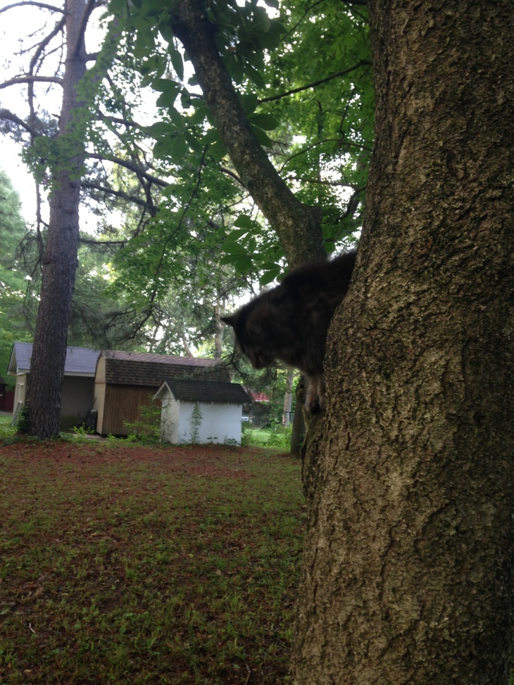 Every once in a while New Kitty will climb a tree just to show she can.