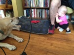 A young girl gets closer to the dog, but continues to be frightened.