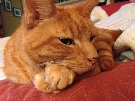 The orange cat.