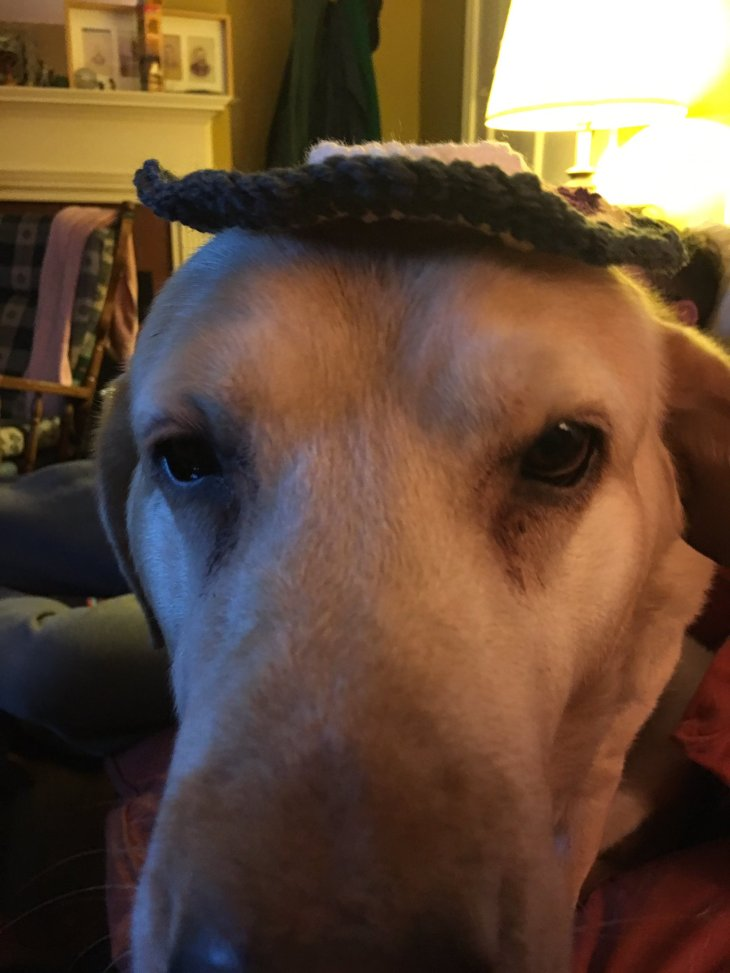 dog-in-hat